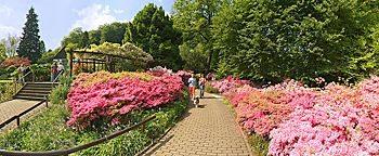 Azaleen Botanischer Garten Bielefeld