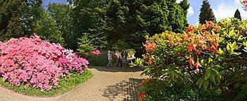 Azaleenstrauch Botanischer Garten Bielefeld