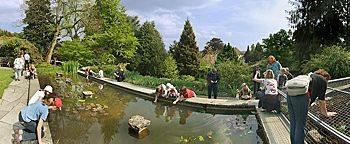 Seerosenbecken Botanischer Garten Bielefeld