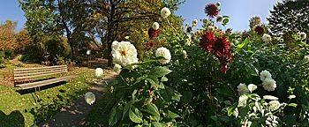 Blumengarten Botanischer Garten Bochum
