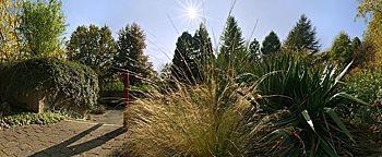 Ziergras Botanischer Garten Bochum