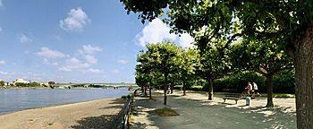 Rheinufer Beul  Bonn