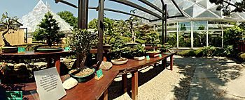 Bonsaiausstellung Essen