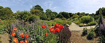 Garten für Insekten Essen
