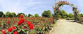 Rosengarten Gruga-Park Essen