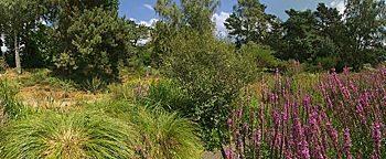 Bachaue Botanischer Garten Botanischer GartenFrankfurt