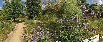 Mediterrane Flora Botanischer Garten Frankfurt