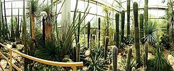 Wüsten-Schauhaus Palmengarten Frankfurt