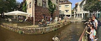Krokodil im Kanal  Freiburg