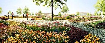 Blütenteppich BUGA 2005München