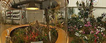 Orchideenschau BUGA 2009Schwerin