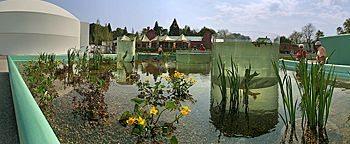 Teichpflanzen Schwerin